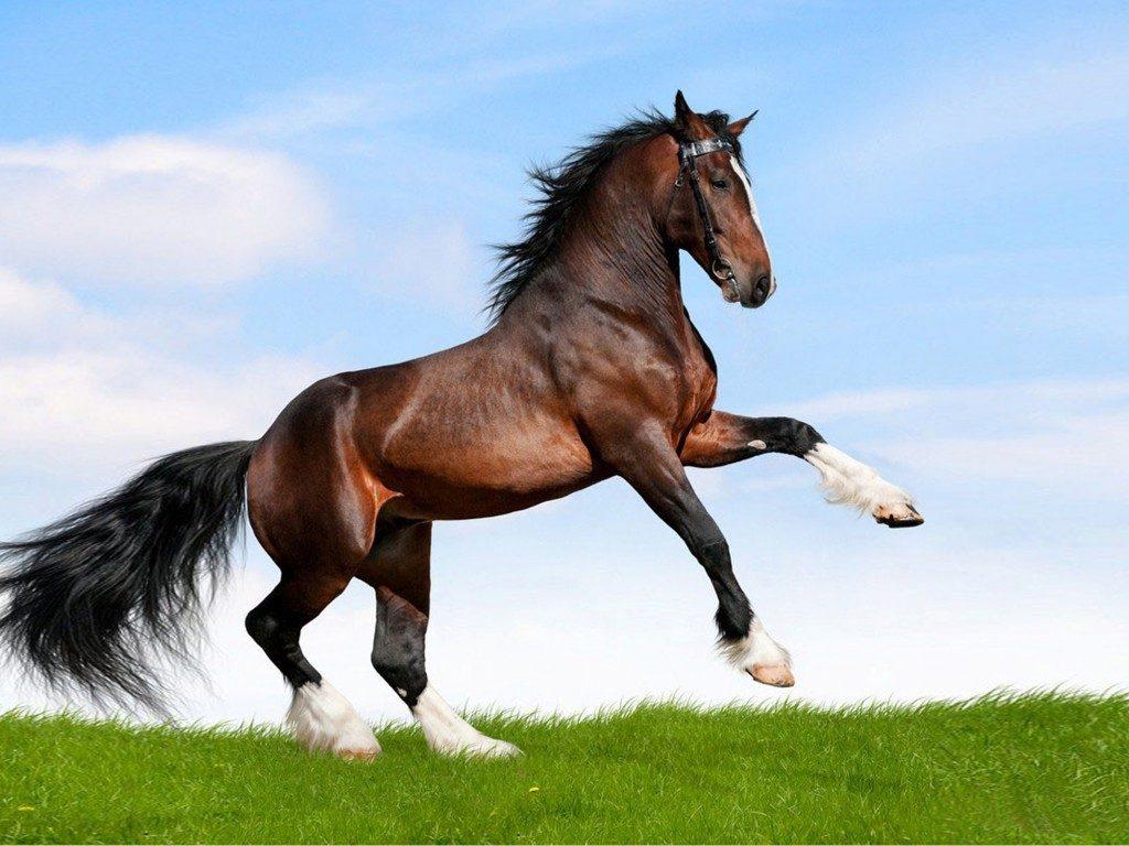 Hikmah Kuda Dalam Surah Al 'Adiyat